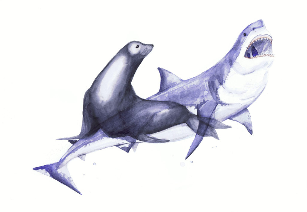 Tiburón vs. Foca